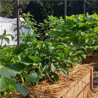 Que faire au potager et au jardin en novembre ?